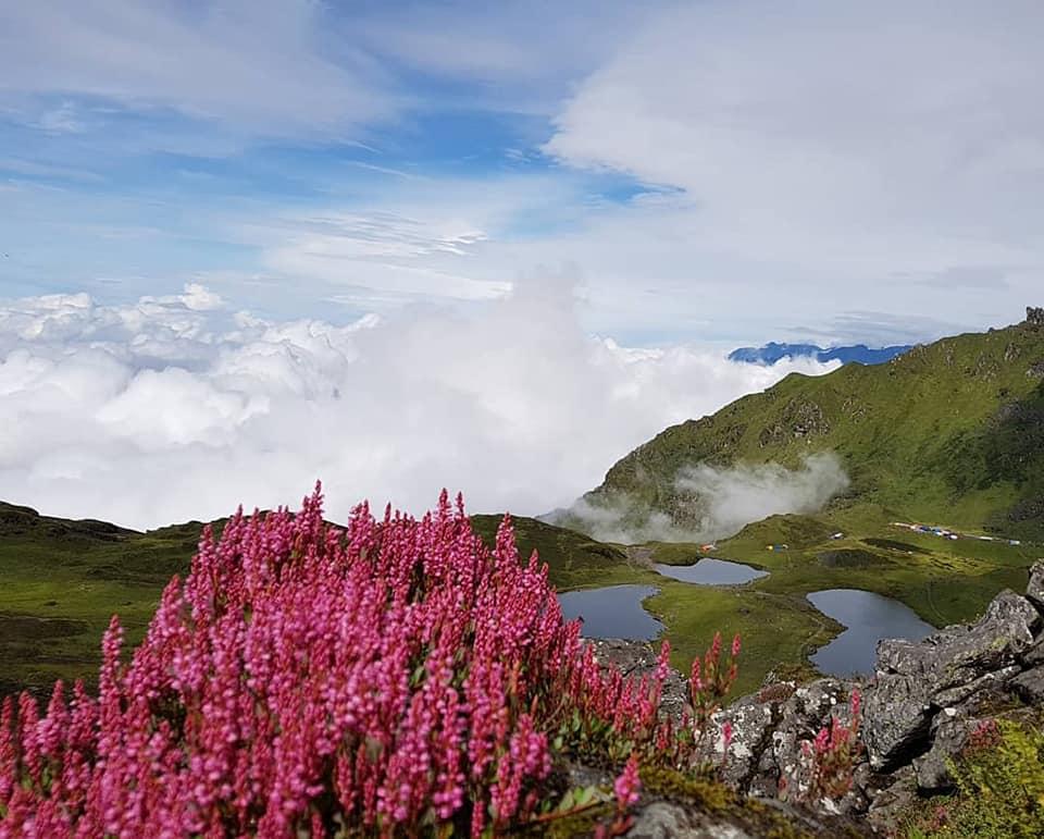 लेकाली फुल