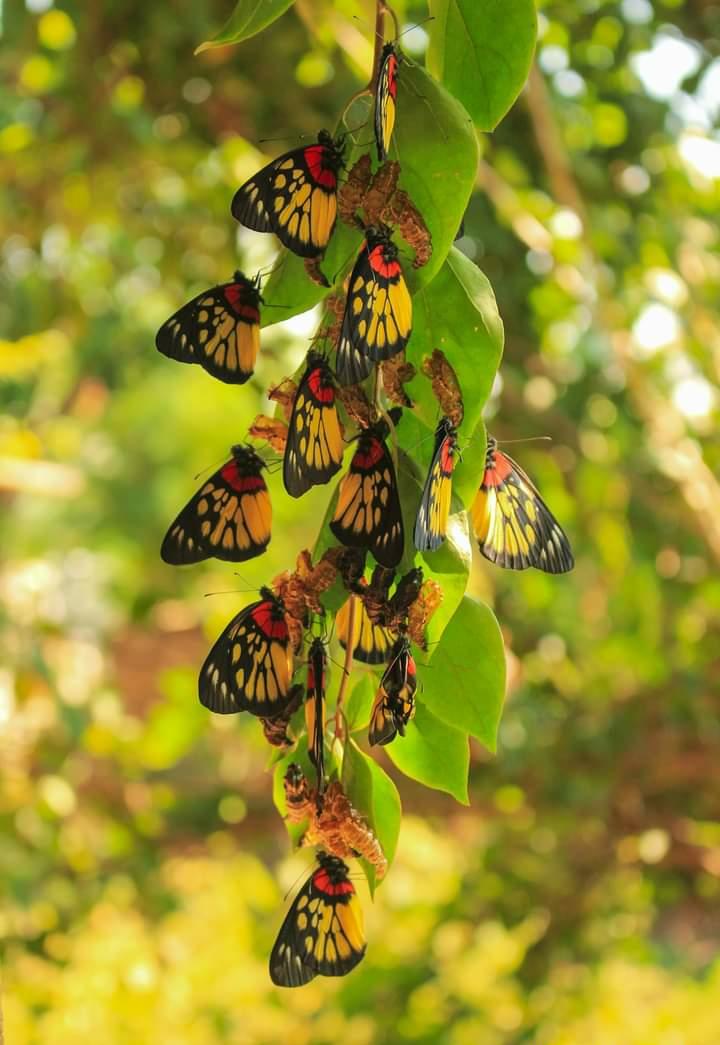 Butterfly watching  in Nepal