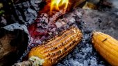 यात्रा संस्मरण :मकै पोल्ने आमै सँग जोडिएको मेरो झापा यात्रा