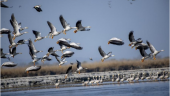 Number of water birds declines